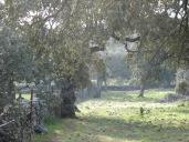 FSG ENERO 2007